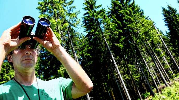 Der Ramsbacher Revierleiter Siegfried Huber wird bei der Suche nach vom Borkenkäfer befallenen Fichten in diesem Jahr besonders häufig fündig. Die Schäden im Wald seien so groß wie seit Jahrzehnten nicht mehr.