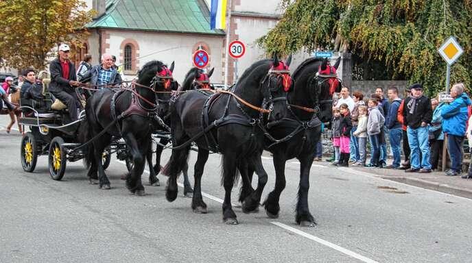 Auch die Besitzer von Pferdegespannen sind bei der Reiterprozession am 21. Oktober dabei, die von Nußbach zur Wendelskapelle führt.