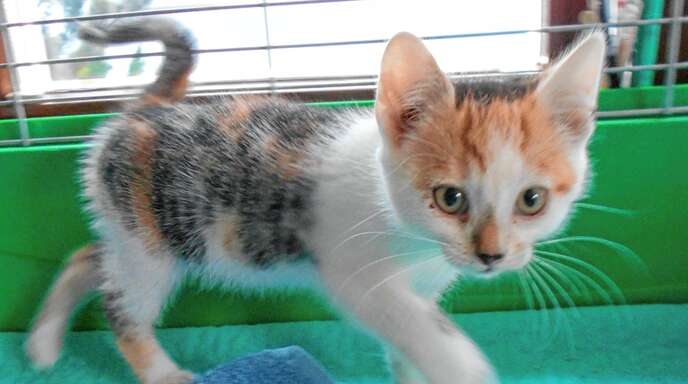 Der Tierschutzverein rät dringend, Katzen kastrieren zu lassen