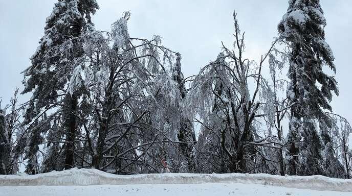 Das Amt für Waldwirtschaft gibt Tipps, um den Borkenkäferbefall im Frühjahr zu begrenzen.