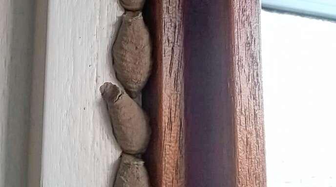 Hallo Robby! Ich habe das an meinem Türrahmen entdeckt und möchte gerne wissen was es denn ist. Vielen Dank im voraus. Irene Dornia aus Zierolshofen