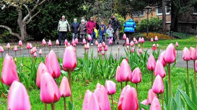 Das Wetter war am Sonntag eher schlecht – die Resonanz auf das Tulpenfest im Stadtpark dagegen gut.