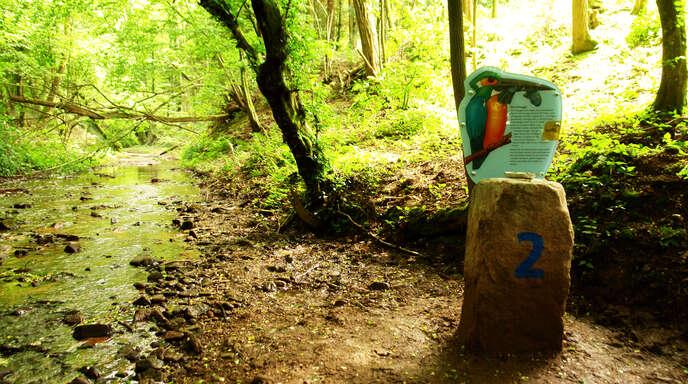 Sechs Stationen werden auf der Tour über den Wassserpfad Sulzbachtal angesteuert