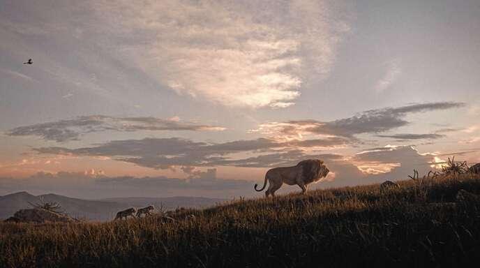 Ein Sommerkino-Hit: Das Remake des Zeichentrickklassikers »Der König der Löwen«