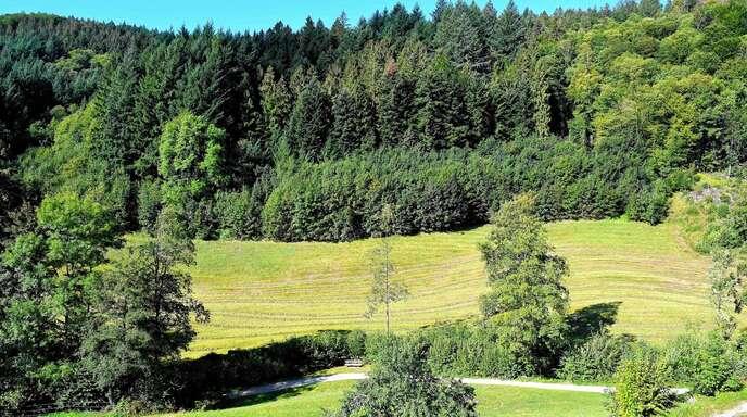 Um Aufforstung im Ortsteil Grimmerswald ging es am Donnerstag im Gemeinderat Seebach, der Rat lehnte sie ab. Das Bild zeigt die beantragte Aufforstungsfläche.