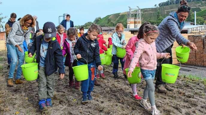 Wildblumen-Samen verteilten Kinder der Kita St. Stefan Oberachern auf einem Erdwall beim Sägewerk Keller. Sie wollen im Frühjahr wiederkommen, wenn Klatschmohn und Schlüsselblume blühen.