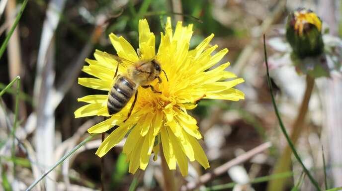 Volksbegehren Pro Biene
