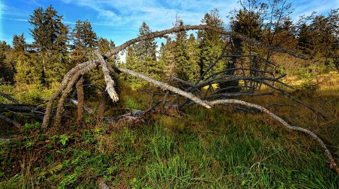 Die Arrondierung des Nationalparks Schwarzwald mit drei Gemeinden wurde nun rechtlich vollzogen.