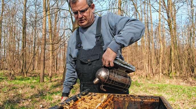 Um biis zu 450 Bienenvölker kümmerte sich der Berufsimker Christoph Koch in den Höchstzeiten.