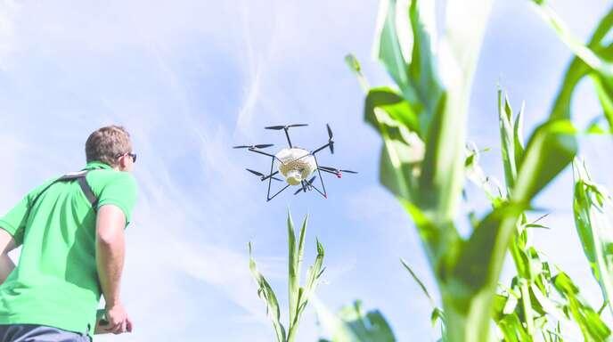 Eine Drohne bringt Kapseln mit Eiern der Schlupfwespe aus – sie sollen auf ökologischem Wege den Maiszünsler bekämpfen.