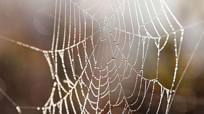 Bei Recherchen zum Thema Spinnenseide hat Charlotte Hopfe eine neue Spinnenart entdeckt.