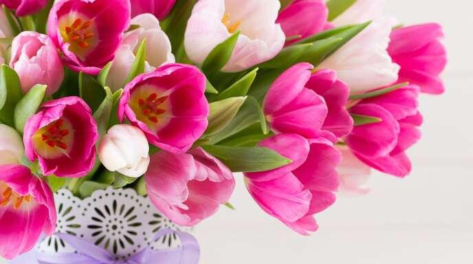 Floristen hätten gerne die Erlaubnis für Vertrauenskassen – doch die Politik will bisher keine Lockerungen.
