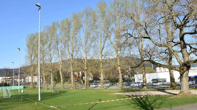 In der markierten Fläche zwischen Pappelreihe und Trainingsplätzen des Renchtalstadions will der SV Oberkirch eine Freilufthalle bauen. Der Trompetenbaum rechts vorne möglicherweise gefällt werden.
