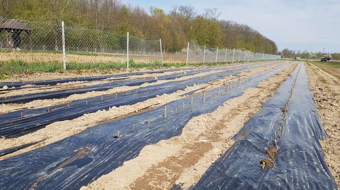 In der Pflanzschule Schutterwald, die sich an der Ostseite des Nasswaldes befindet, werden alljährlich einige hundert Jungbäume gepflanzt und groß gezogen.