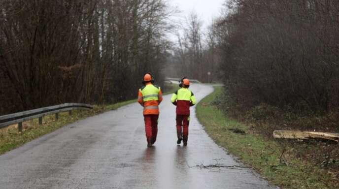 Kontrast: Zwei Waldarbeiter in ihrer Arbeitskleidung in Signalfarben heben sich deutlich vom grauen Himmel und dem noch kahlen Wald ab.