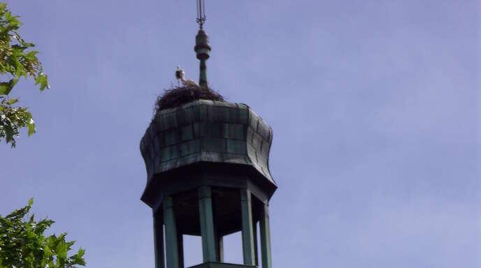 Hoch oben im Nest auf der Stadtkirche St. Arbogast sind nun nur noch zwei Jungstörche zu versorgen.
