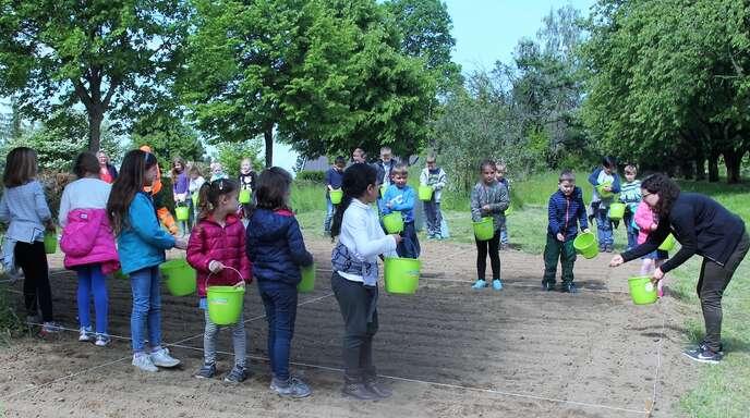 Das Anlegen von Blühstreifen, wie hier durch Kinder der Önsbacher Grundschule, findet auch in Achern vermehrt statt.