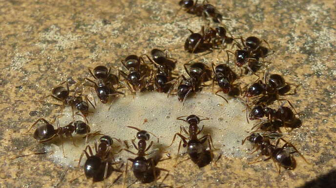 Eine Ameisenkolonie hat sich offenbar einen Verteilerkasten in Marlen als Heimstatt ausgesucht.
