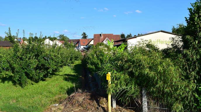 Eine Obstbaumwiese am Ortsrand von Önsbach soll Baufläche werden. Jetzt wurde die Änderung des Flächennutzungsplans in diesem Teilbereich eingeleitet.
