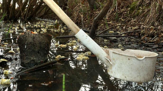 Mitarbeiter der Kabs prüfen den Larvenbefall eines Tümpels. Nur bei starkem Befall wird gespritzt.