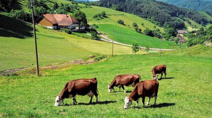 Um die Offenhaltung der Täler zu fördern, wurde in Mühlenbach das zweite Weidezaunprojekt gestartet.