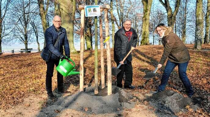 Der Sprossenschutz für junge Bäume besteht meist aus Ortenauer Esskastanien-Holz und wird hier sogar für eine solche genutzt.