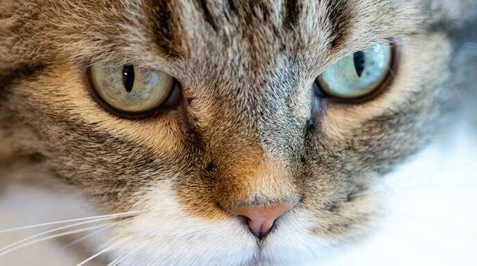 Der Blick sagt alles: Komm mir bloß nicht zu nahe Mensch!
