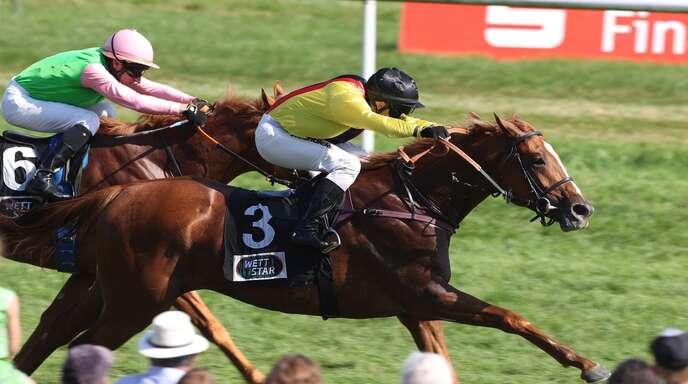 Der Prix-de-l'Arc-Sieger Torquator Tasso sorgt für Aufbruchstimmung in der deutschen Galopp-Szene. Davon profitiert auch das Sales & Racing Festival am Wochenende in Iffezheim.