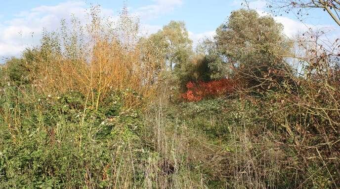 Das Biotop »Obermättig« entstand mithilfe der Familie Lasch aus Bodersweier, die eine Naturschutzstiftung gegründet hat.