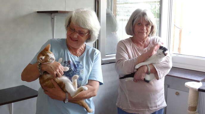 Katzenstation Achern