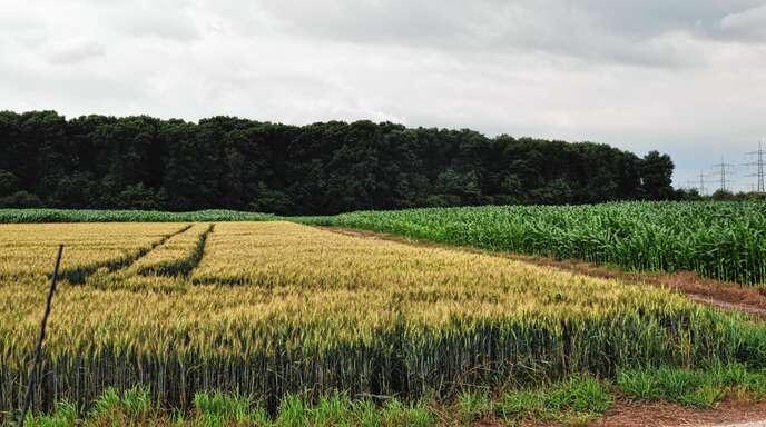 Im Gewann Birkenmuhr, angrenzend an den gleichnamigen Wald in Linx, soll als Ausgleichsfläche für künftigen Kiesabbau aufgeforstet werden. Der Linxer Rat will das hochwertige Ackerland dafür aber nicht hergeben.