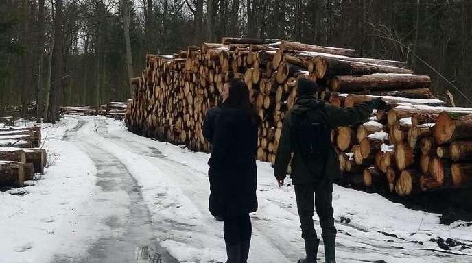 Umweltaktivisten stehen im Bialowieza-Wald neben einem Stapel illegal gefällter Bäume.