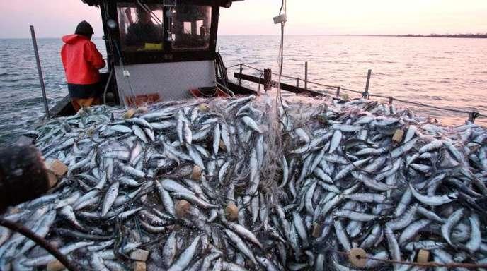 Im Streit über die Fischerei mit Schlepp- und Stellnetzen in Meeresschutzgebieten der deutschen Nord- und Ostsee fällt der Europäische Gerichtshof ein Grundsatzurteil.