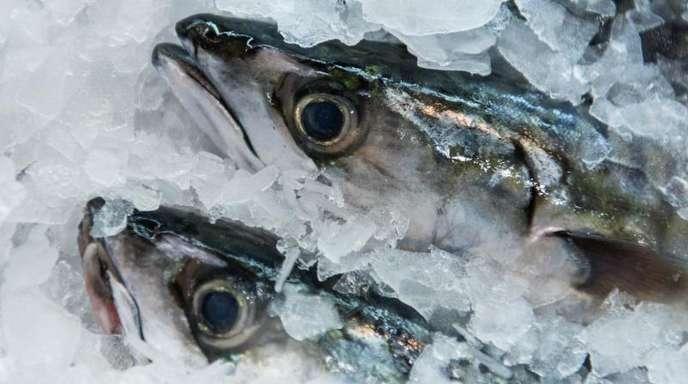 Makrelen liegen in einem Frischemarkt in Hamburg in der Auslage im Eis. Für den Verzehr von Fisch und Meeresfrüchten geben die Verbraucher in Deutschland immer mehr Geld aus.