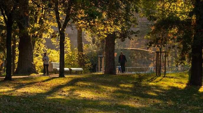 Die Morgensonne beleuchtet das herbstlich gefärbte Laub der Bäume.