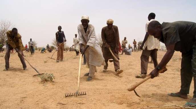 Männer arbeiten im Niger auf einem ausgedörrten Feld.