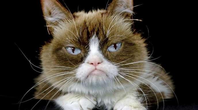 «Grumpy Cat» wurde durch ihr mürrisches Gesicht zur Internet-Sensation.