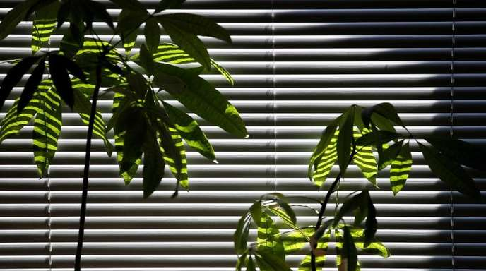 Die Wissenschaft hat festgestellt: «Pflanzen sind großartig, aber sie reinigen die Raumluft nicht schnell genug, um einen Effekt auf die Luftqualität ihres Zuhauses oder ihres Büros zu haben.».