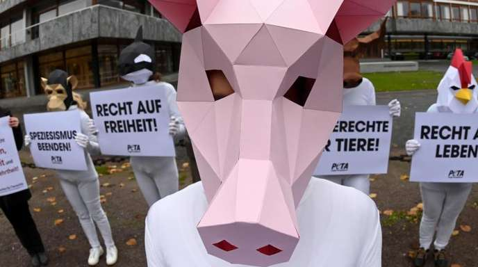 Mit Tiermasken verkleidete Aktivisten der Tierrechtsorganisation Peta protestieren mit Plakaten vor dem Bundesverfassungsgericht.