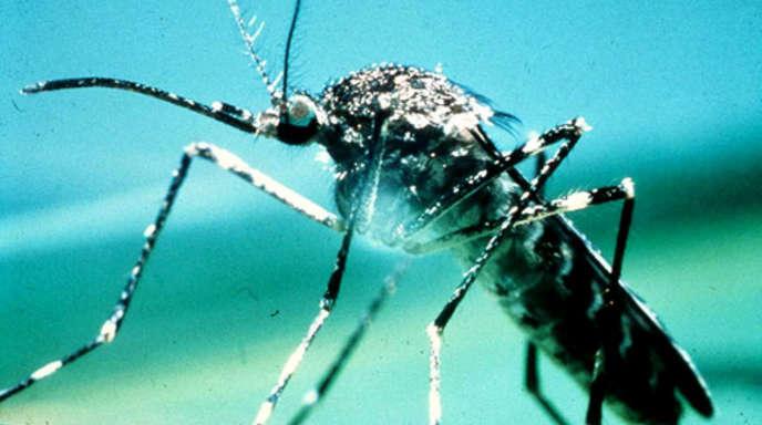 Tabletten gegen mücken