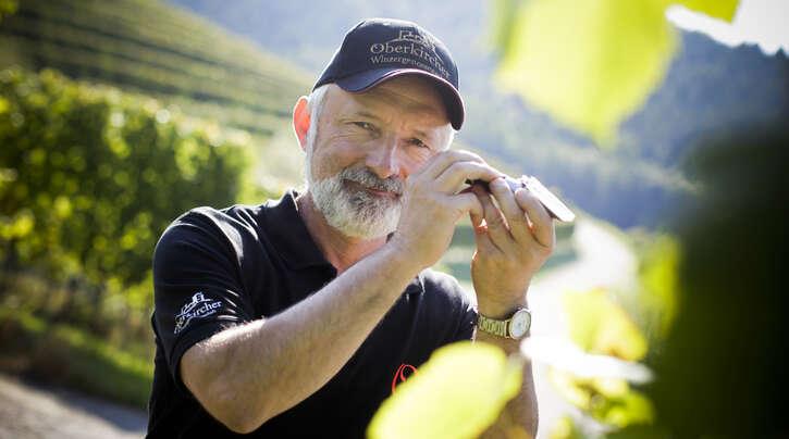 Martin Graf stellt die Rebsorte Gewürztraminer vor.